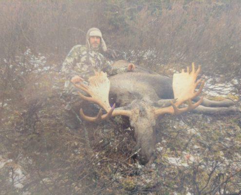 British Columbia Moose Taken with RT101 300 Win Mag