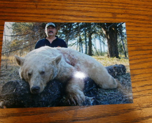 MARKS BLONDE BLACK BEAR ALBERTA